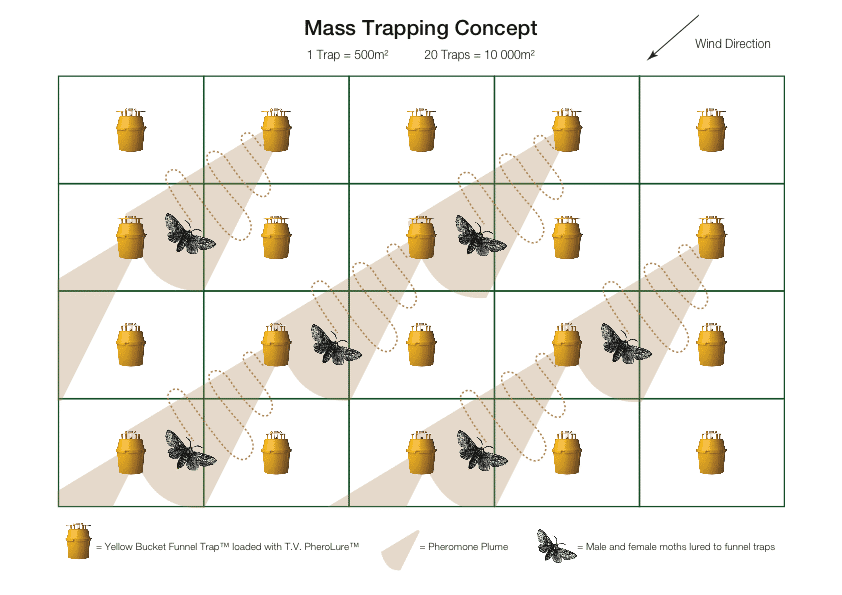 TrapAll Mass Trapping concept