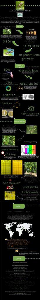 A.C.P. (Asian Citrus Psyllid) Diaphorina citri Asian